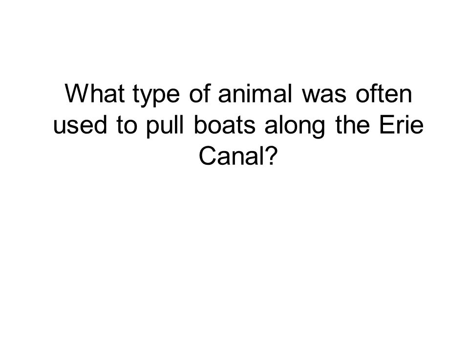 What type of animal was often used to pull boats along the Erie Canal