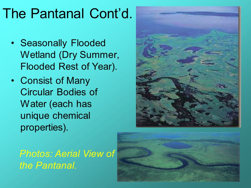 The Pantanal Cont'd. Seasonally Flooded Wetland (Dry Summer, Flooded Rest of Year).