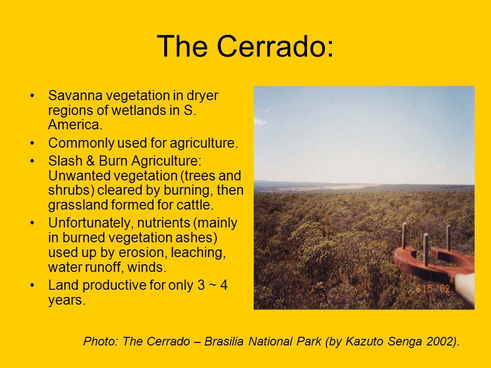 Effects of slash and burn agriculture in the Cerrado: Unproductive land become bare , which leads to: –Erosion –Increased Sedimentation in River & Streams.
