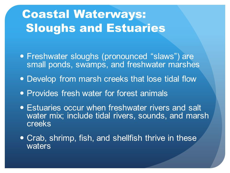 """Coastal Waterways: Sloughs and Estuaries Freshwater sloughs (pronounced """"slaws"""") are small ponds, swamps, and freshwater marshes Develop from marsh cr"""