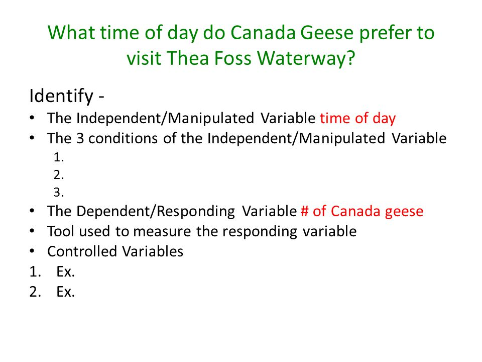 What time of day do Canada Geese prefer to visit Thea Foss Waterway.