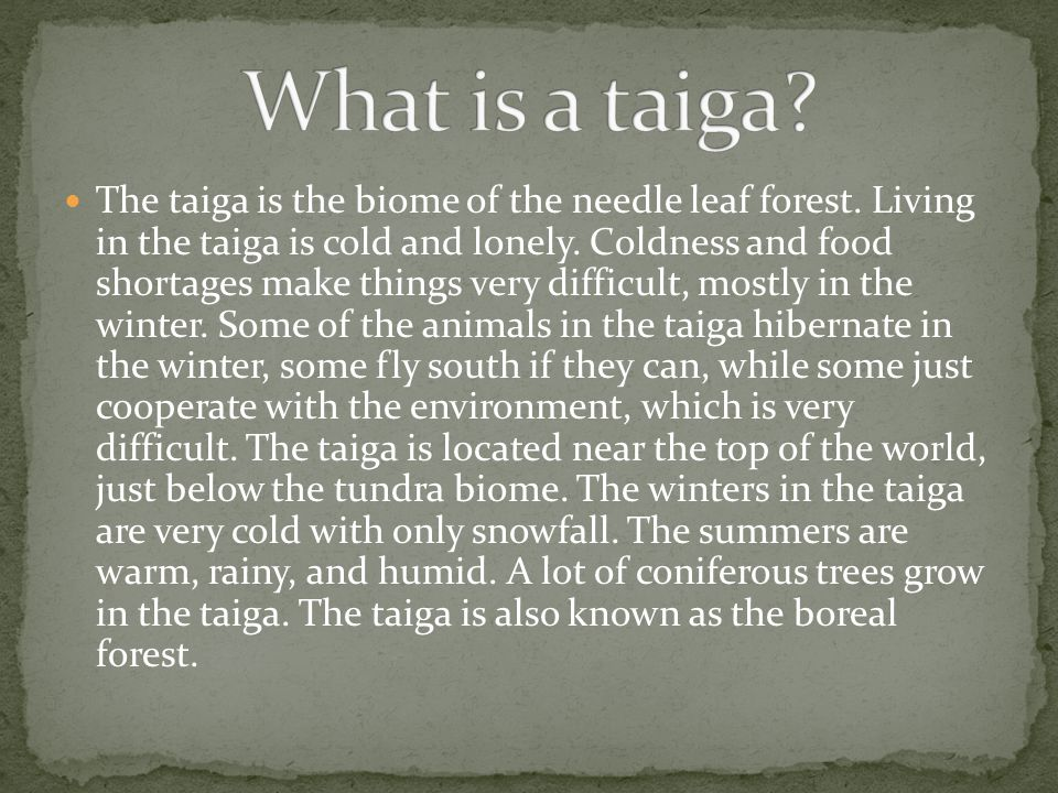 The taiga is the biome of the needle leaf forest. Living in the taiga is cold and lonely. Coldness and food shortages make things very difficult, most