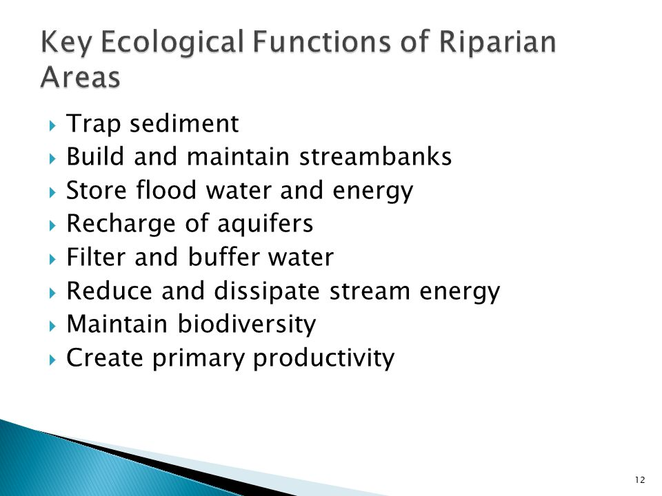  Trap sediment  Build and maintain streambanks  Store flood water and energy  Recharge of aquifers  Filter and buffer water  Reduce and dissipate stream energy  Maintain biodiversity  Create primary productivity 12