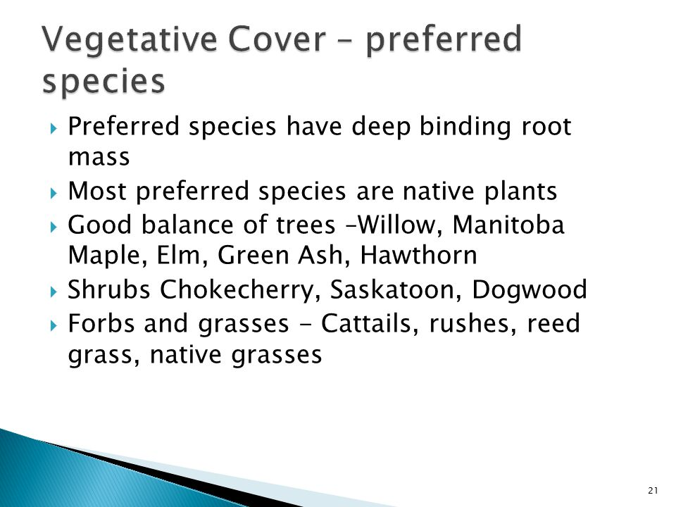  Preferred species have deep binding root mass  Most preferred species are native plants  Good balance of trees –Willow, Manitoba Maple, Elm, Green Ash, Hawthorn  Shrubs Chokecherry, Saskatoon, Dogwood  Forbs and grasses - Cattails, rushes, reed grass, native grasses 21