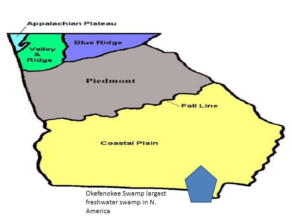 Okefenokee Swamp largest freshwater swamp in N. America