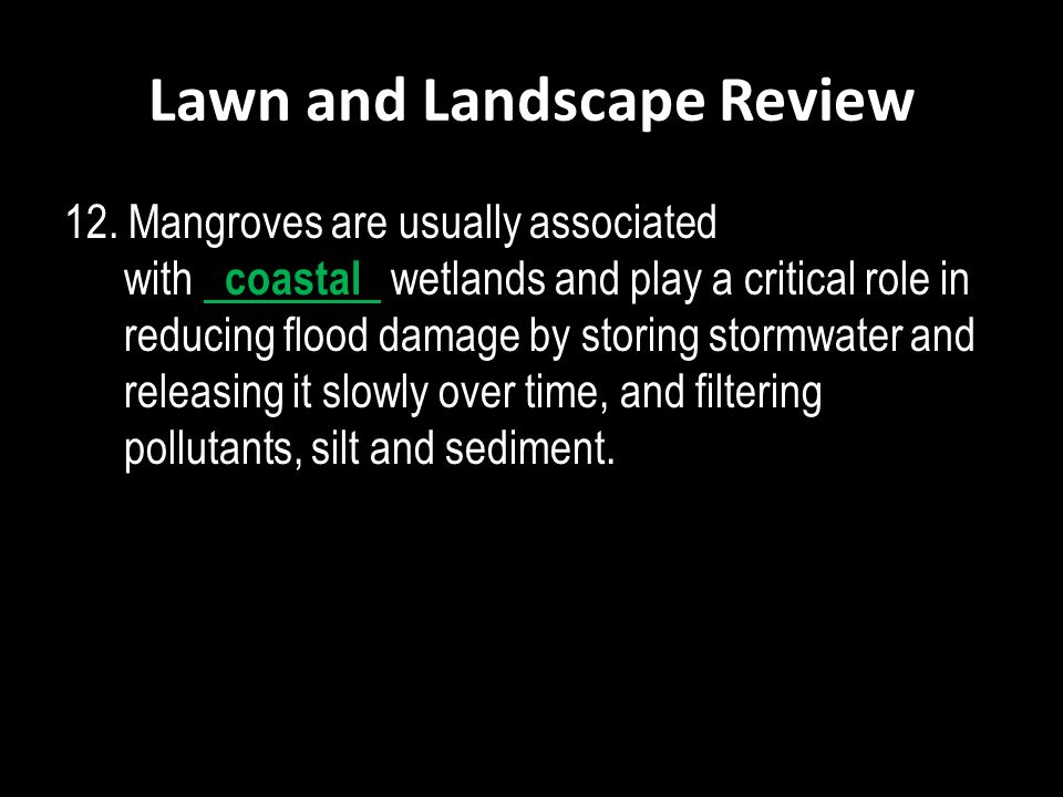 Lawn and Landscape Review 12. Mangroves are usually associated with coastal wetlands and play a critical role in reducing flood damage by storing stor