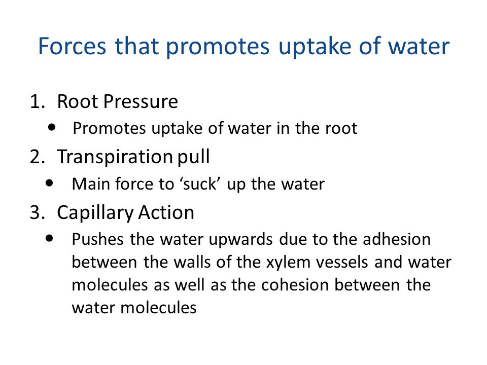 Forces that promotes uptake of water 1.Root Pressure Promotes uptake of water in the root 2.Transpiration pull Main force to 'suck' up the water 3.Cap