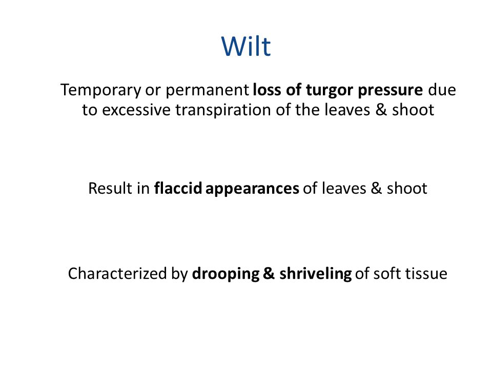 Wilt Temporary or permanent loss of turgor pressure due to excessive transpiration of the leaves & shoot Result in flaccid appearances of leaves & sho
