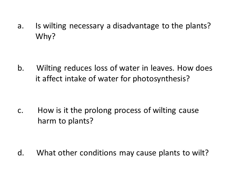 a.Is wilting necessary a disadvantage to the plants? Why? b. Wilting reduces loss of water in leaves. How does it affect intake of water for photosynt