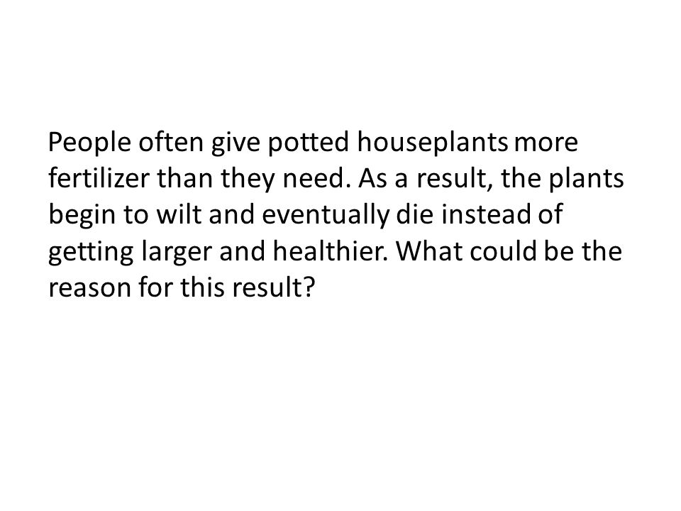 People often give potted houseplants more fertilizer than they need. As a result, the plants begin to wilt and eventually die instead of getting large