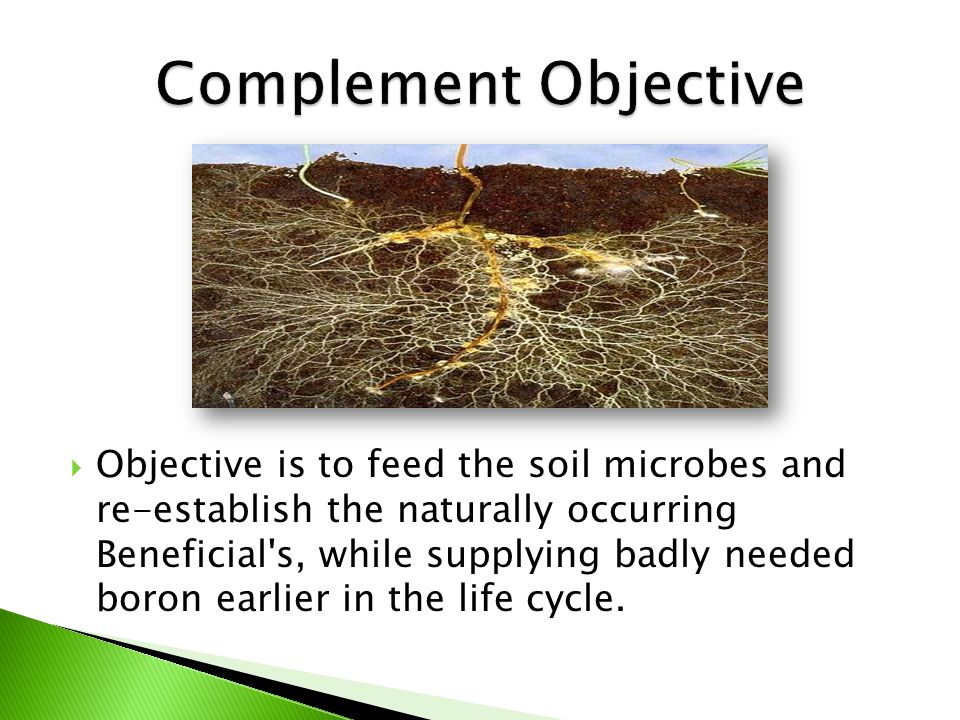  Objective is to feed the soil microbes and re-establish the naturally occurring Beneficial s, while supplying badly needed boron earlier in the life cycle.
