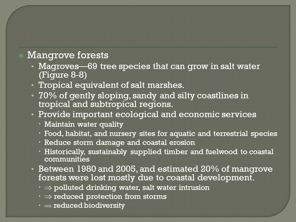  Mangrove forests Magroves—69 tree species that can grow in salt water (Figure 8-8) Tropical equivalent of salt marshes. 70% of gently sloping, sandy