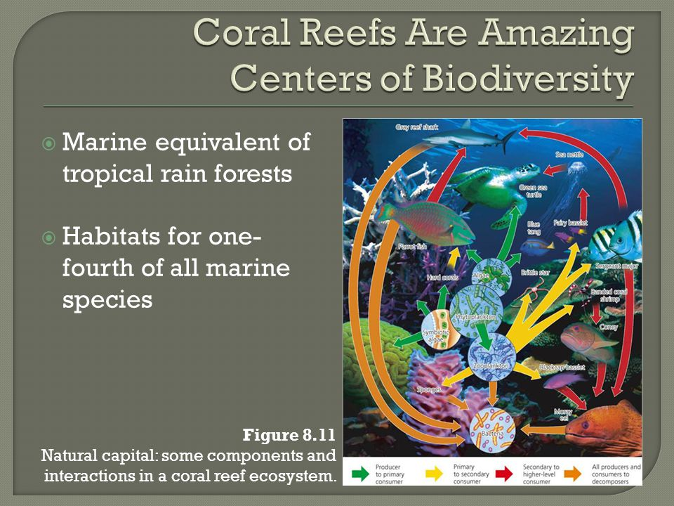  Marine equivalent of tropical rain forests  Habitats for one- fourth of all marine species Figure 8.11 Natural capital: some components and interac