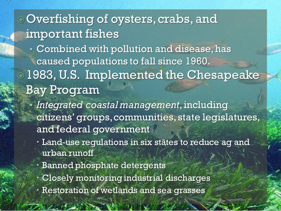  Overfishing of oysters, crabs, and important fishes Combined with pollution and disease, has caused populations to fall since 1960. Combined with po