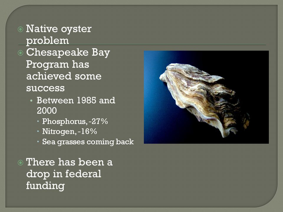  Native oyster problem  Chesapeake Bay Program has achieved some success Between 1985 and 2000  Phosphorus, -27%  Nitrogen, -16%  Sea grasses com