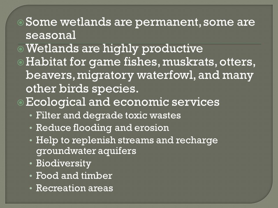  Some wetlands are permanent, some are seasonal  Wetlands are highly productive  Habitat for game fishes, muskrats, otters, beavers, migratory wate