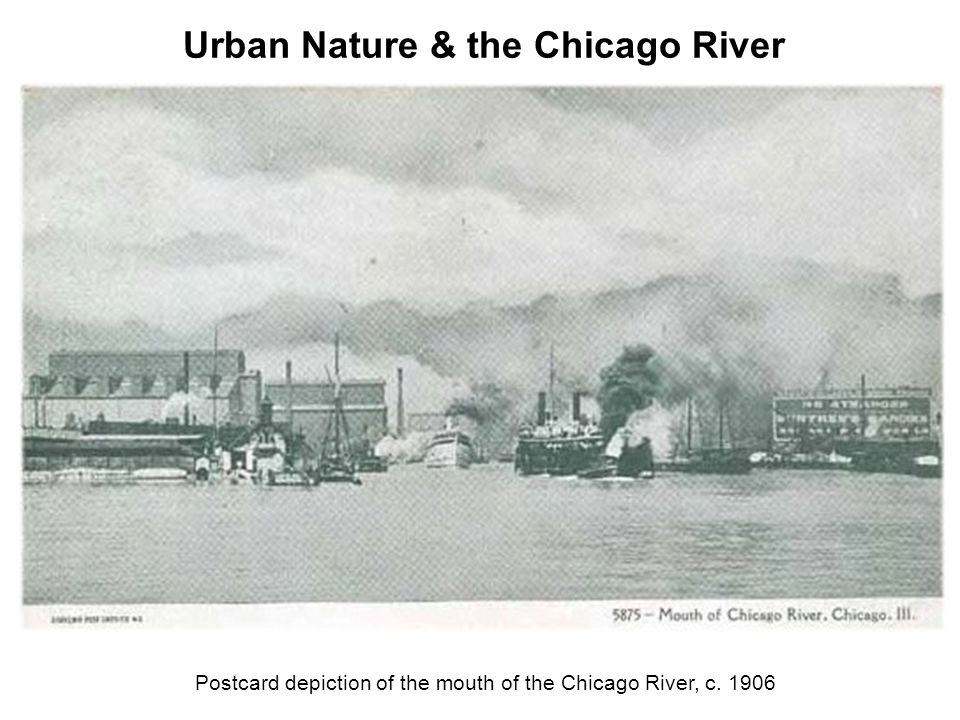 Postcard depiction of the mouth of the Chicago River, c. 1906 Urban Nature & the Chicago River