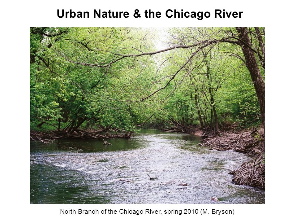 North Branch of the Chicago River, spring 2010 (M. Bryson) Urban Nature & the Chicago River