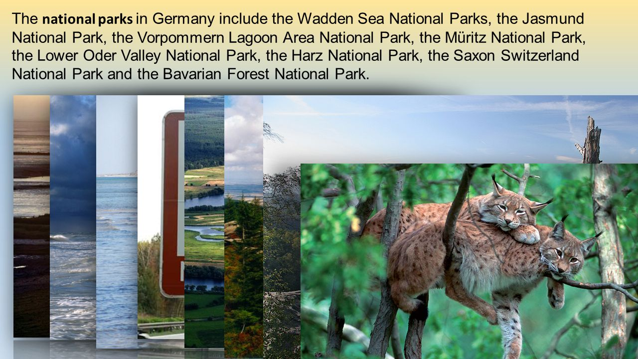 The national parks in Germany include the Wadden Sea National Parks, the Jasmund National Park, the Vorpommern Lagoon Area National Park, the Müritz National Park, the Lower Oder Valley National Park, the Harz National Park, the Saxon Switzerland National Park and the Bavarian Forest National Park.