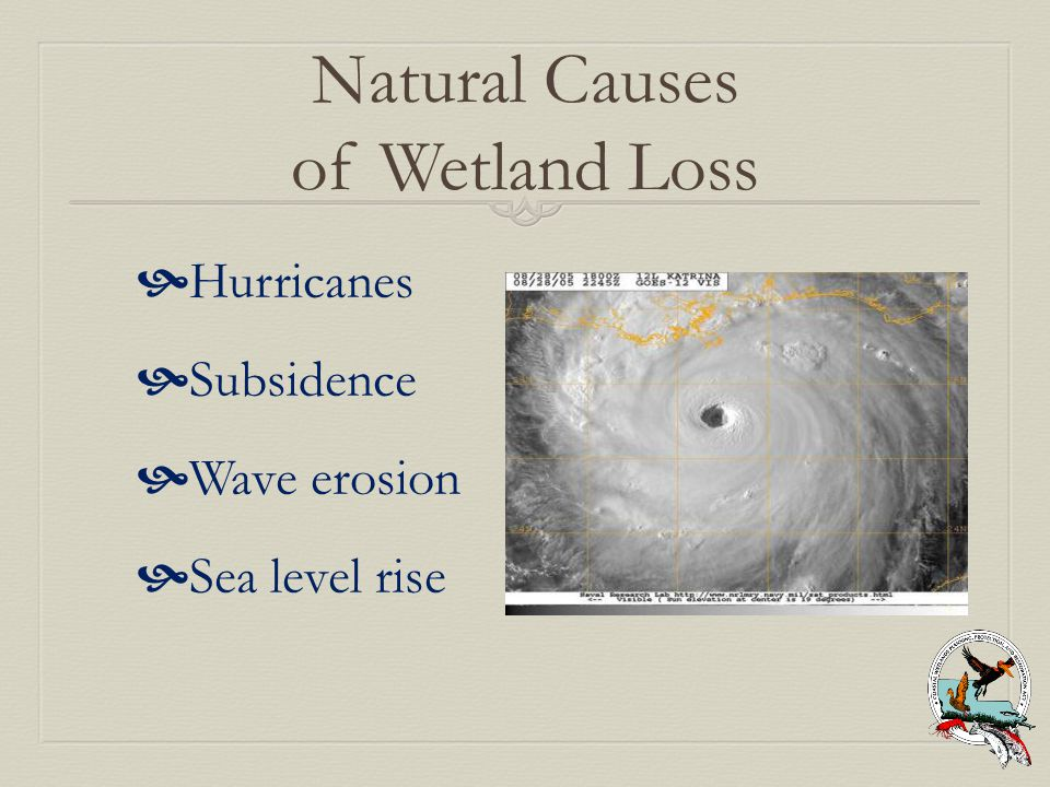 Natural Causes of Wetland Loss  Hurricanes  Subsidence  Wave erosion  Sea level rise