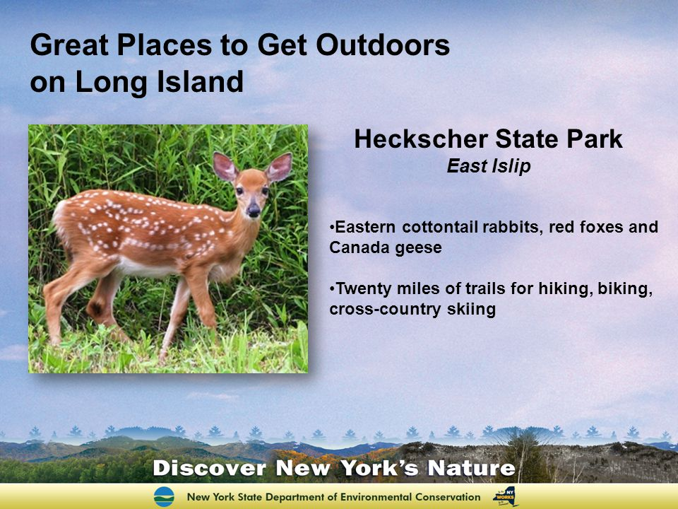 Heckscher State Park East Islip Eastern cottontail rabbits, red foxes and Canada geese Twenty miles of trails for hiking, biking, cross-country skiing Great Places to Get Outdoors on Long Island