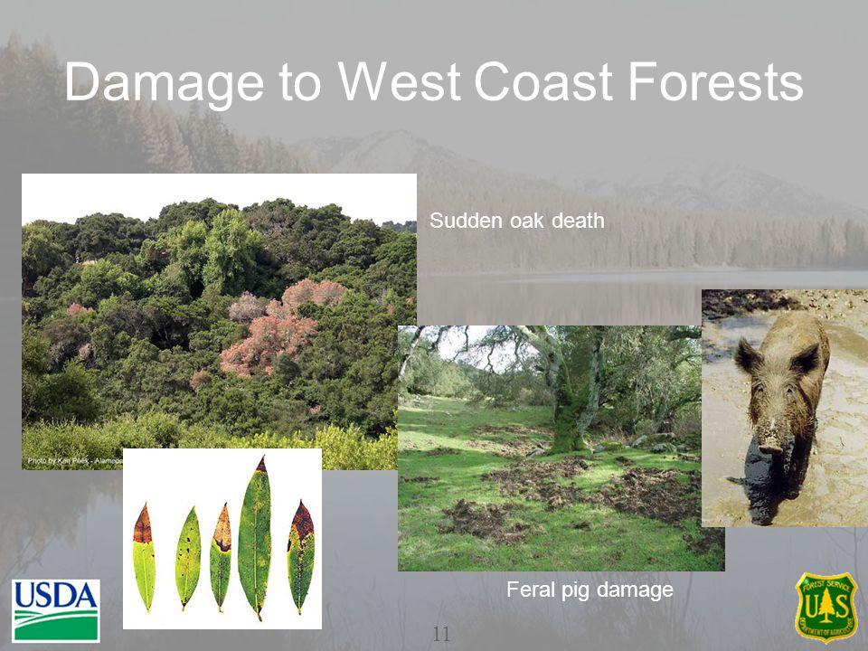 Damage to West Coast Forests Sudden oak death Feral pig damage 11