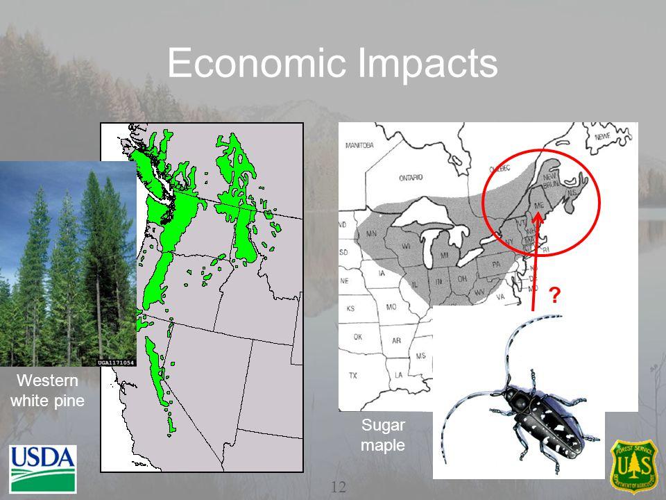 Economic Impacts Western white pine Sugar maple 12