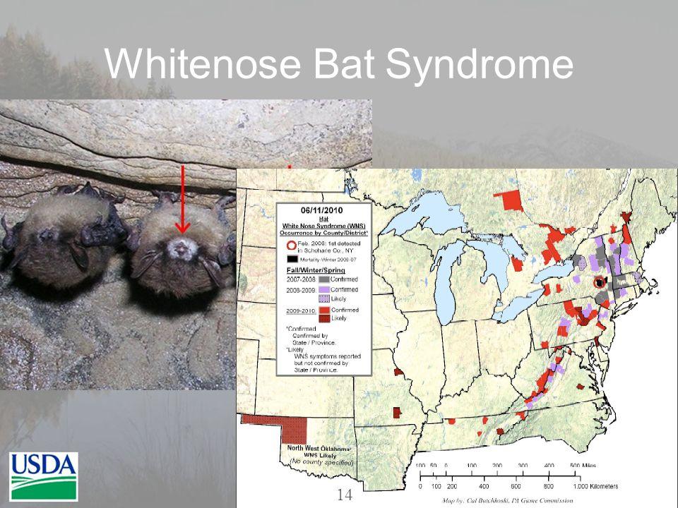 Whitenose Bat Syndrome 14