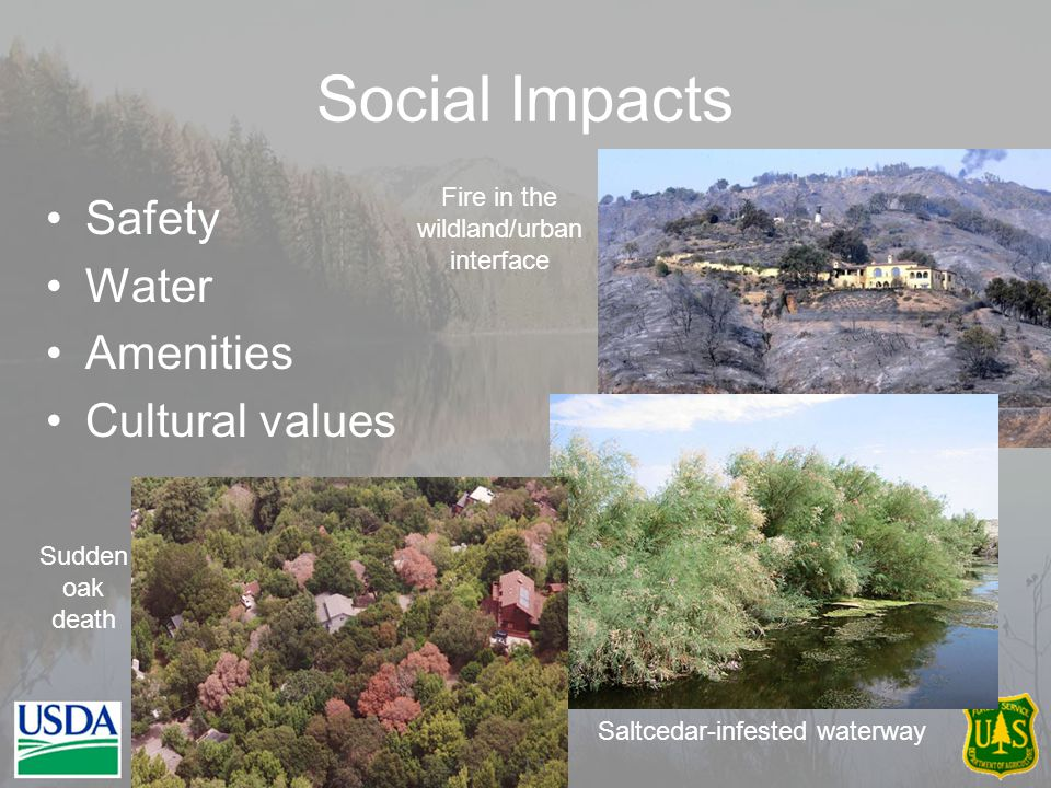 Safety Water Amenities Cultural values Social Impacts Saltcedar-infested waterway Sudden oak death Fire in the wildland/urban interface 15