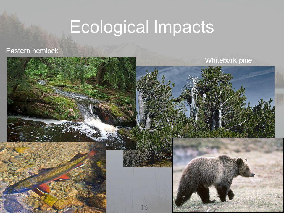 Ecological Impacts Whitebark pine Eastern hemlock 16