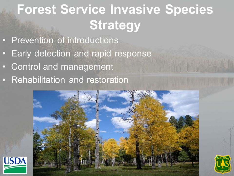 Forest Service Invasive Species Strategy Prevention of introductions Early detection and rapid response Control and management Rehabilitation and restoration 17