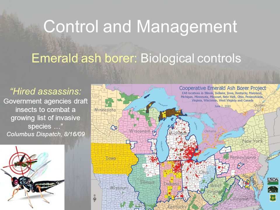 Control and Management Emerald ash borer: Biological controls Hired assassins: Government agencies draft insects to combat a growing list of invasive species … Columbus Dispatch, 8/16/09 24