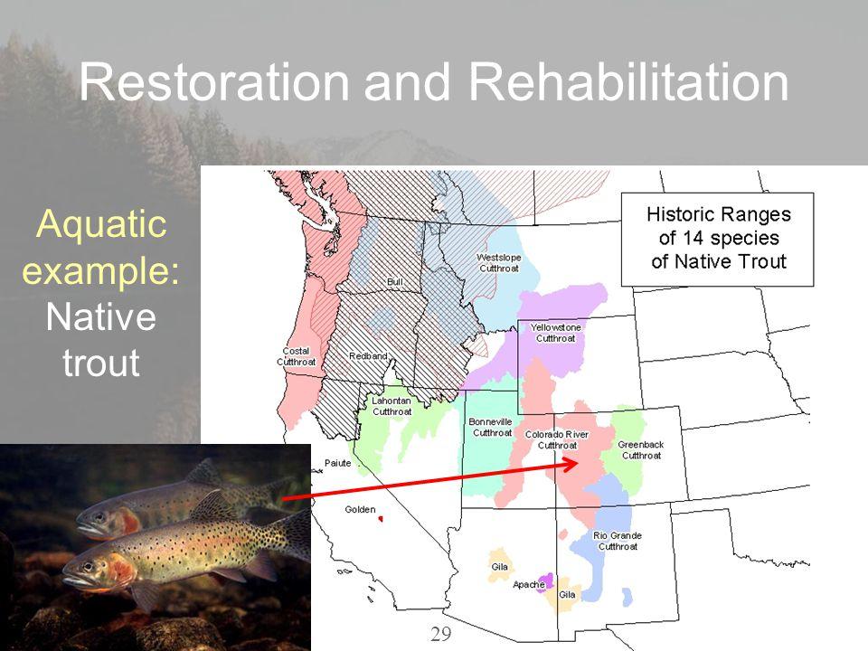 Restoration and Rehabilitation Aquatic example: Native trout 29