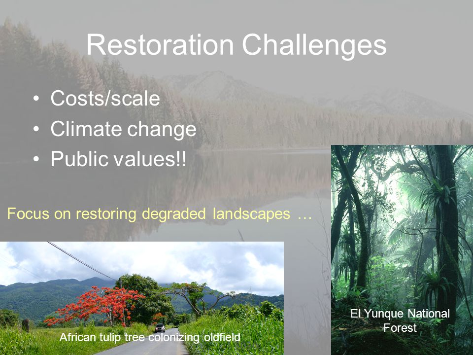 Restoration Challenges Costs/scale Climate change Public values!! African tulip tree colonizing oldfield El Yunque National Forest 30 Focus on restori