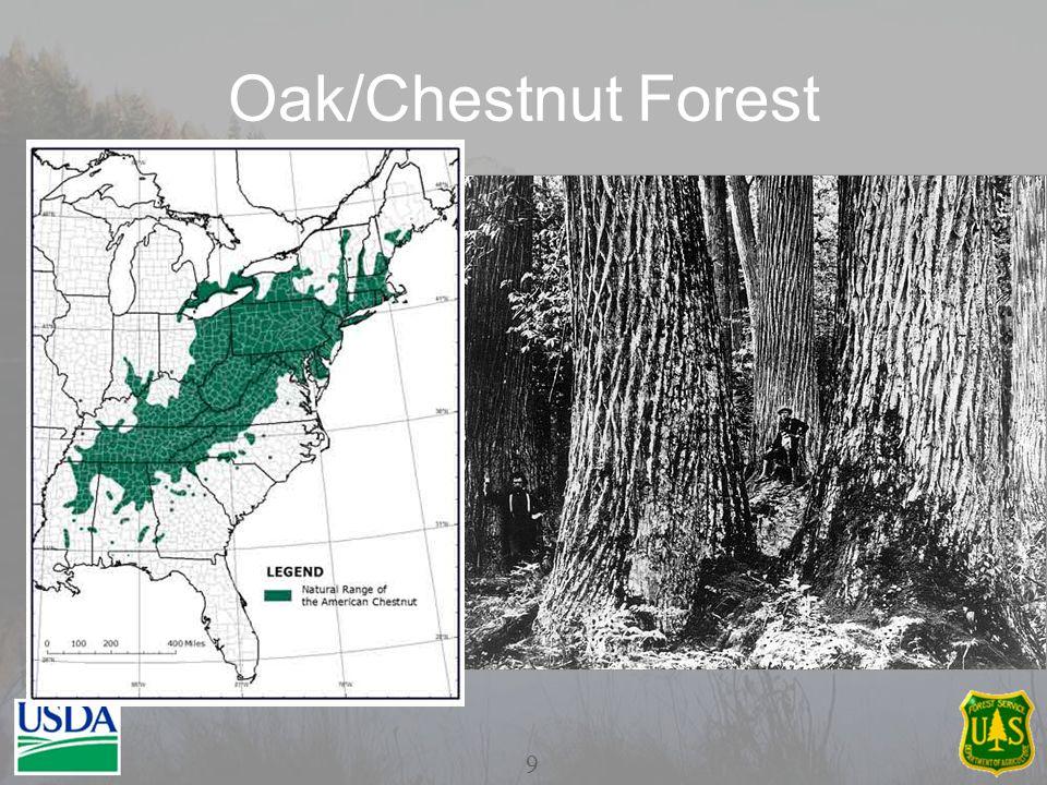 Oak/Chestnut Forest 9