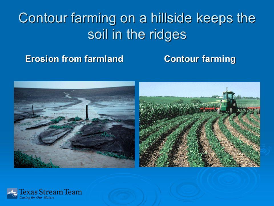 Contour farming on a hillside keeps the soil in the ridges Erosion from farmland Contour farming