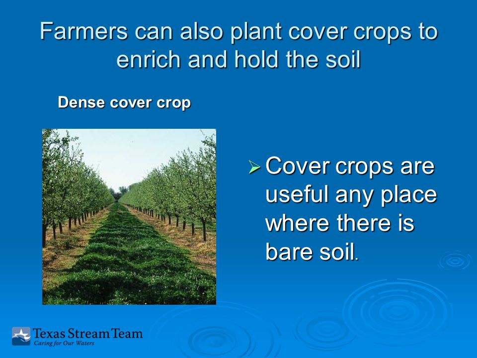 Farmers can also plant cover crops to enrich and hold the soil Dense cover crop  Cover crops are useful any place where there is bare soil.