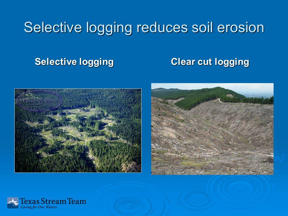 Selective logging reduces soil erosion Selective logging Clear cut logging