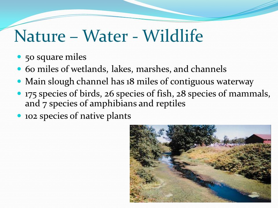 Nature – Water - Wildlife 50 square miles 60 miles of wetlands, lakes, marshes, and channels Main slough channel has 18 miles of contiguous waterway 1