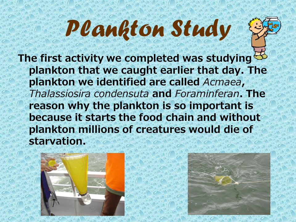 Plankton Study The first activity we completed was studying plankton that we caught earlier that day.