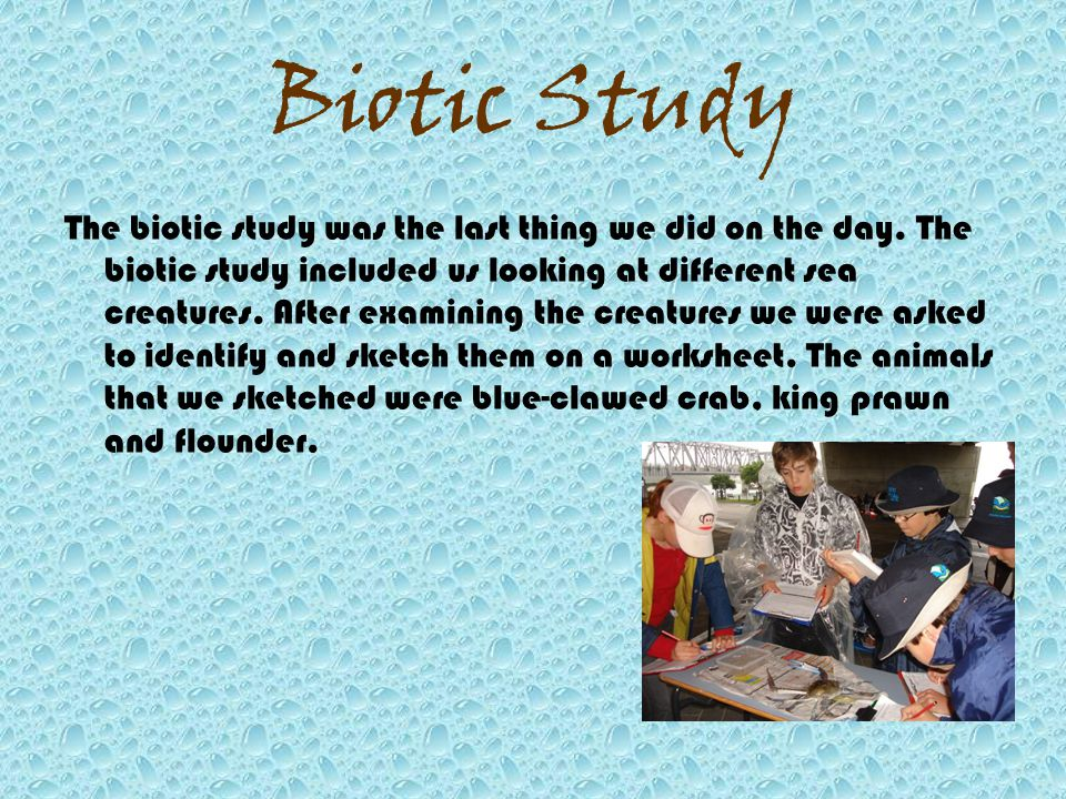 Biotic Study The biotic study was the last thing we did on the day.