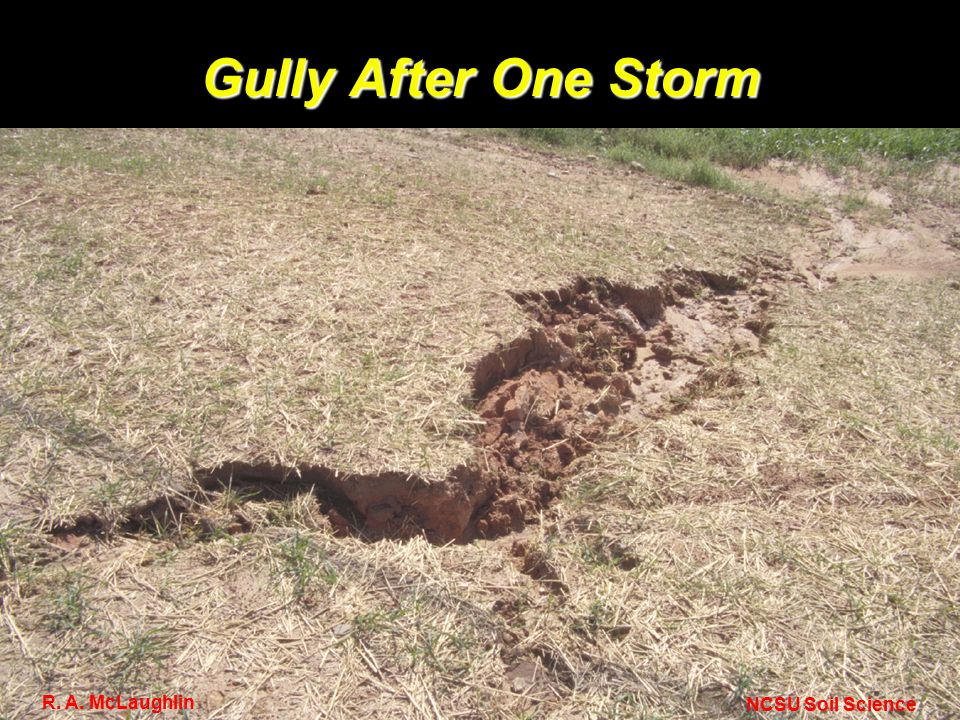 Gully After One Storm NCSU Soil Science R. A. McLaughlin
