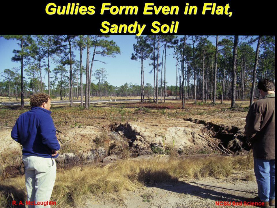 Gullies Form Even in Flat, Sandy Soil NCSU Soil Science R. A. McLaughlin