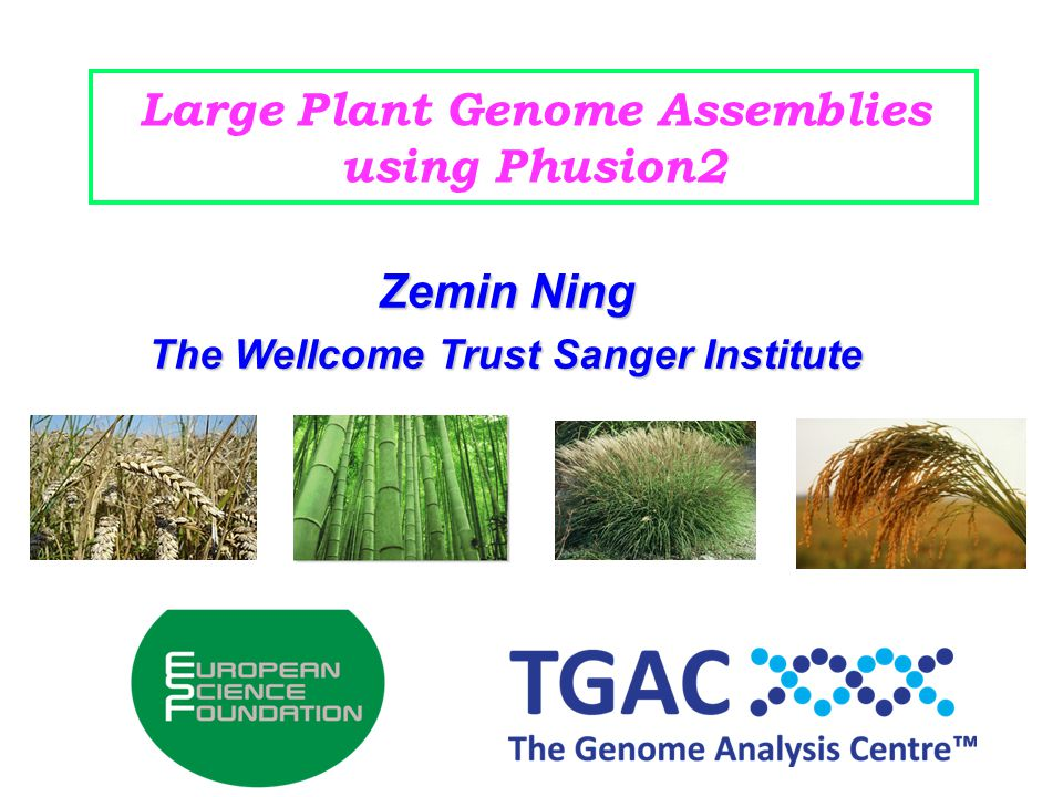 Large Plant Genome Assemblies using Phusion2 Zemin Ning The Wellcome Trust Sanger Institute