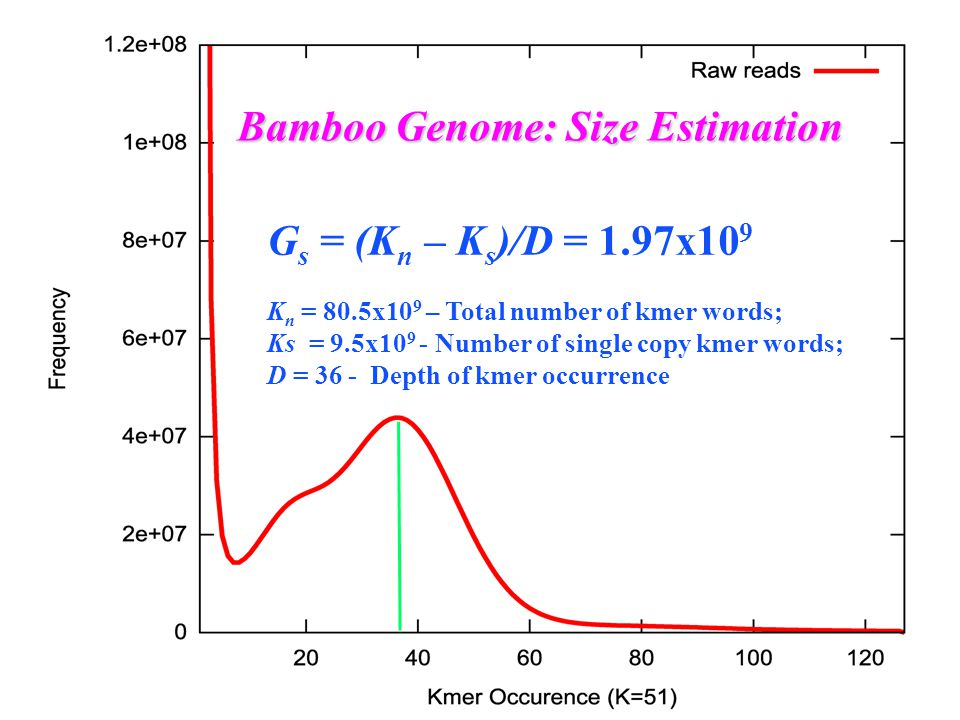 G s = (K n – K s )/D = 1.97x10 9 K n = 80.5x10 9 – Total number of kmer words; Ks = 9.5x10 9 - Number of single copy kmer words; D = 36 - Depth of kmer occurrence Bamboo Genome: Size Estimation