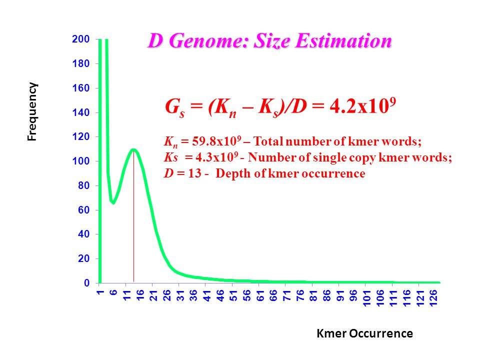 G s = (K n – K s )/D = 4.2x10 9 K n = 59.8x10 9 – Total number of kmer words; Ks = 4.3x10 9 - Number of single copy kmer words; D = 13 - Depth of kmer