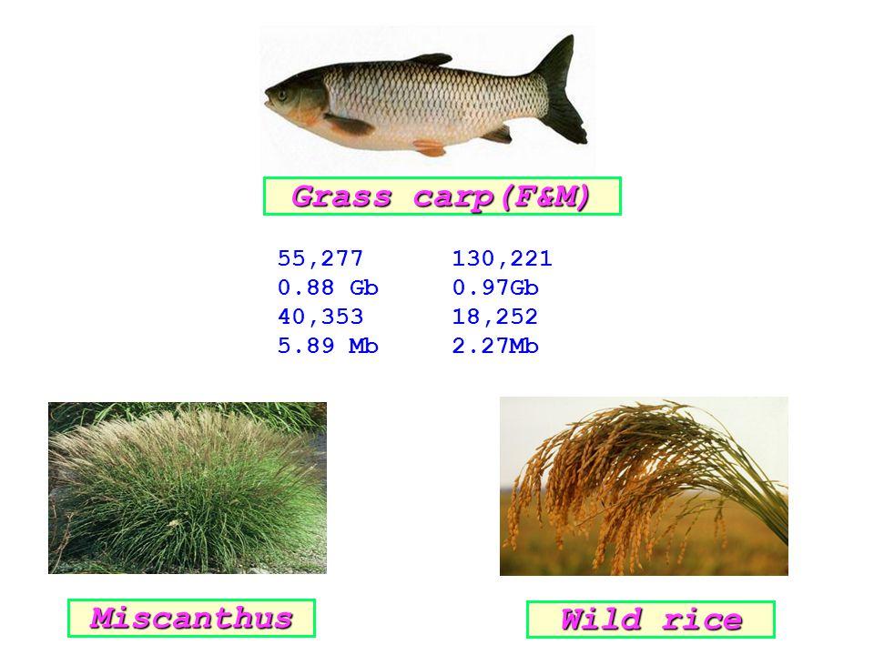 55,277130,221 0.88 Gb0.97Gb 40,35318,252 5.89 Mb2.27Mb Grass carp(F&M) Miscanthus Wild rice