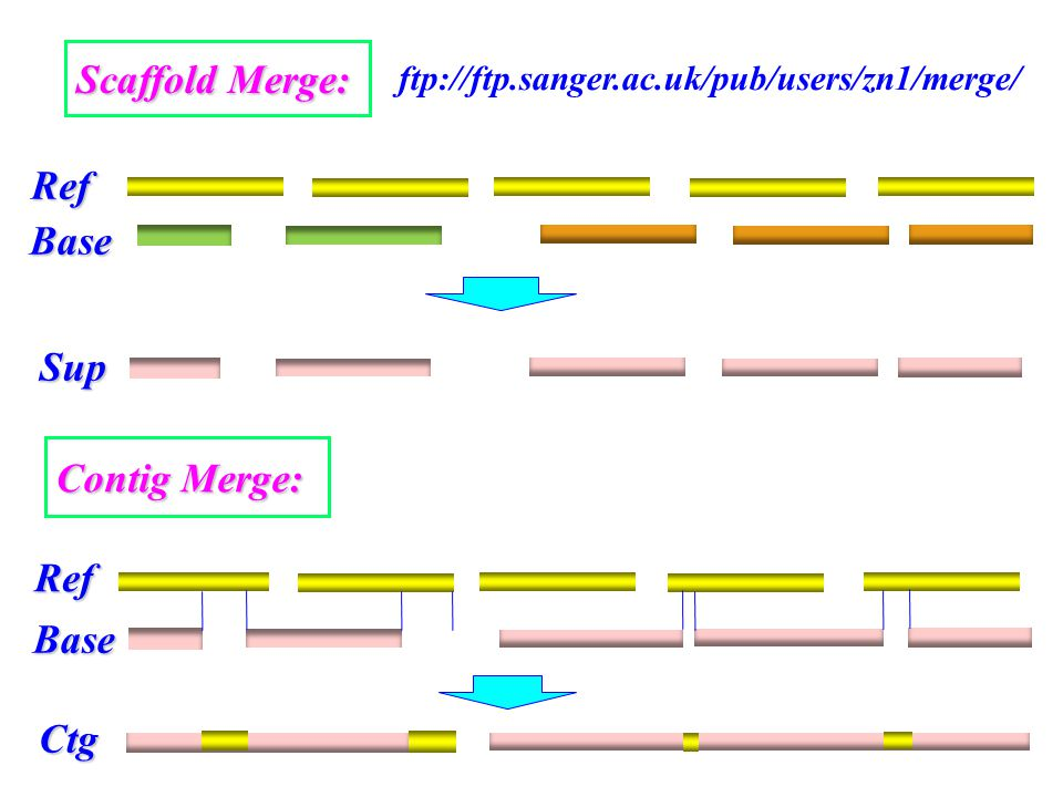 Scaffold Merge: Ref Contig Merge: Base Sup Ref Base Ctg ftp://ftp.sanger.ac.uk/pub/users/zn1/merge/