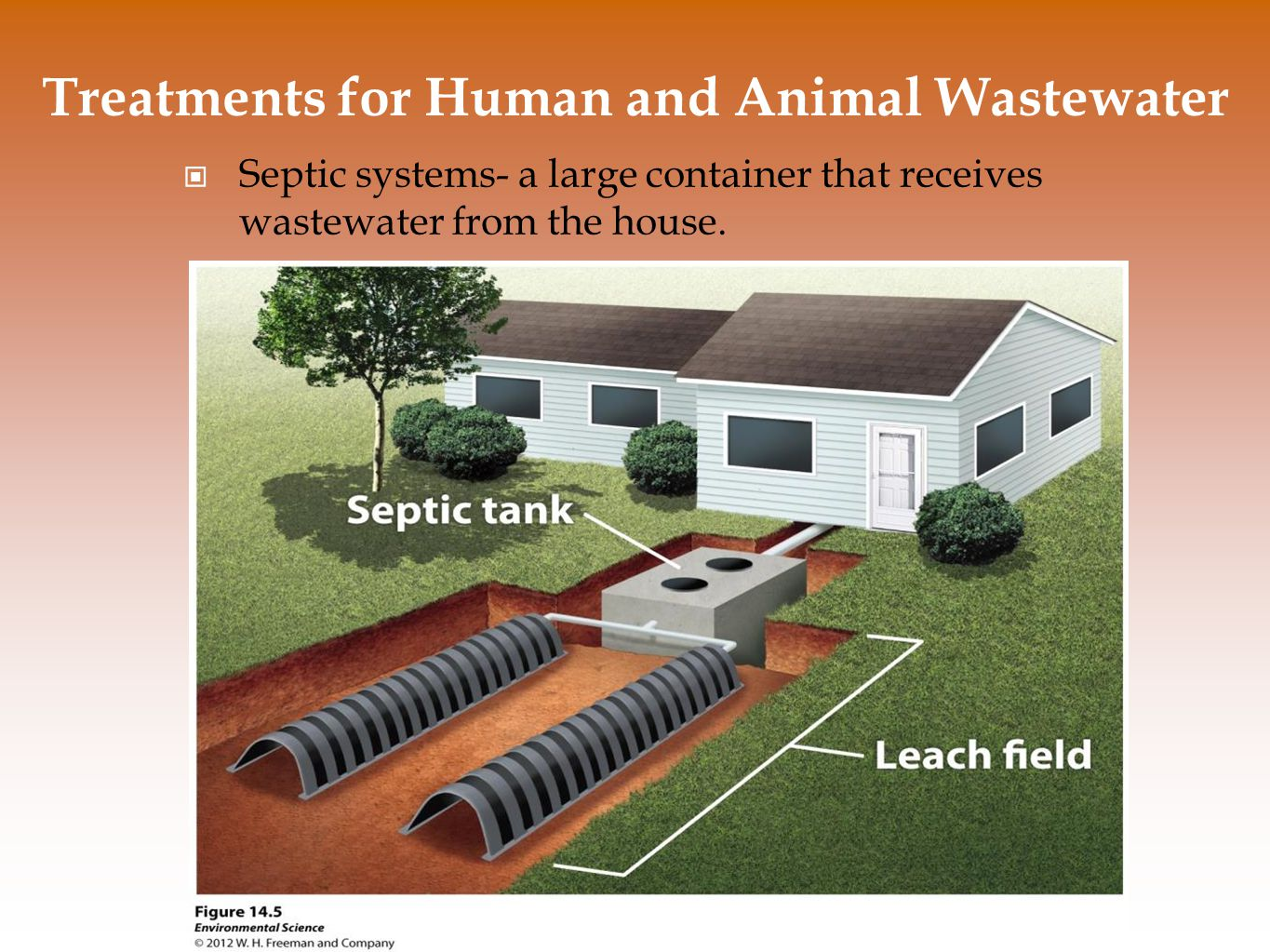 (transfer steps into personal diagrams) Treatments for Human and Animal Wastewater Sewage Treatment Plants- centralized plants in areas with large populations that receive wastewater via a network of underground pipes.