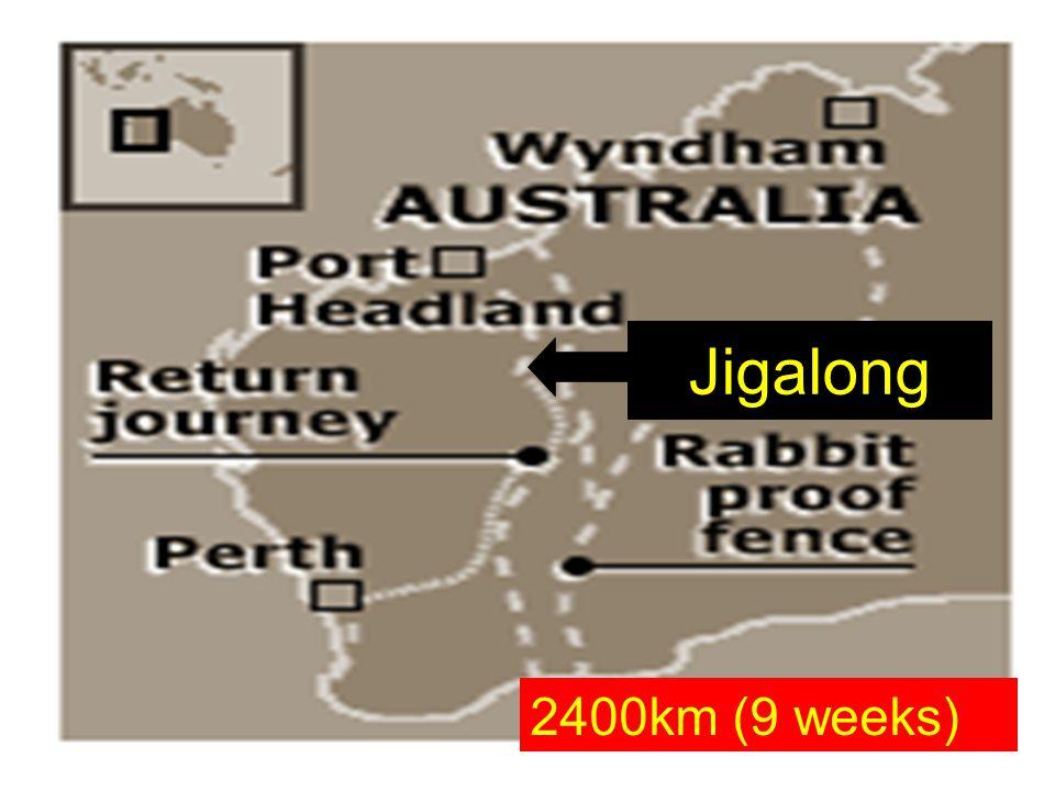 Jigalong 2400km (9 weeks)